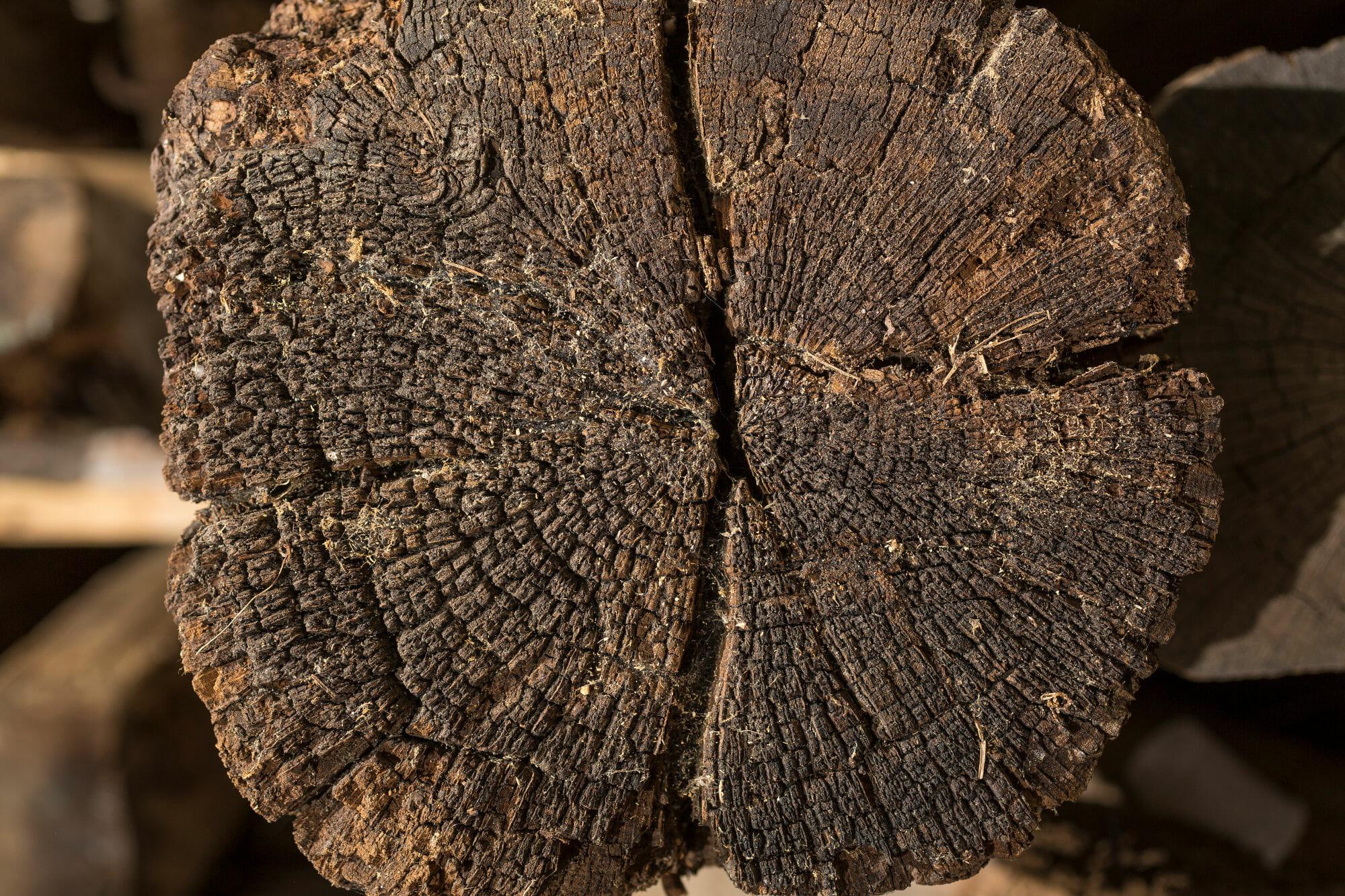 Il punto di partenza sezione di un tronco di recupero - News, il fascino del legno antico di recupero